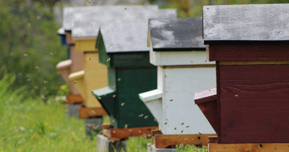 Des abeilles volent en suspens devant leurs ruches