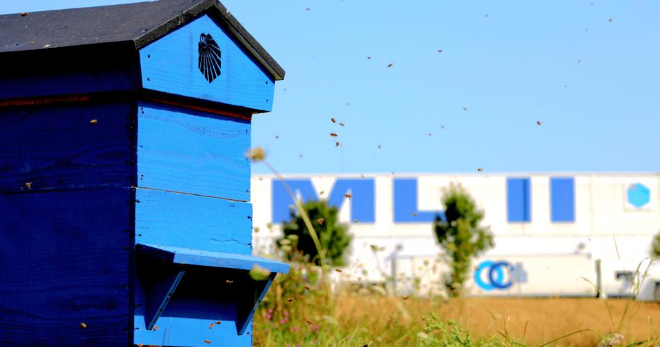 Photographie d'une des 8 ruches des Messageries Laitières