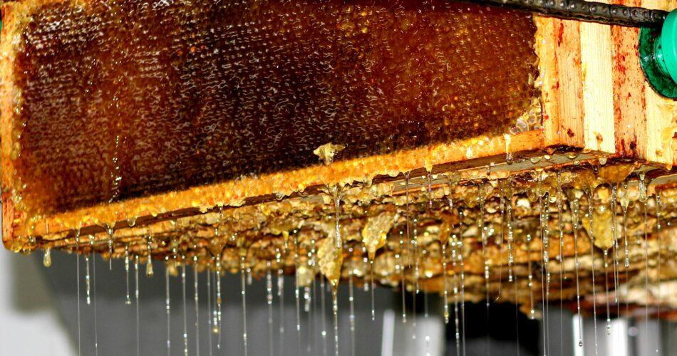 Extraction du miel des ruches des Messageries Laitières